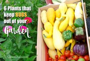 Plants that Keep Bugs Out of Your Garden